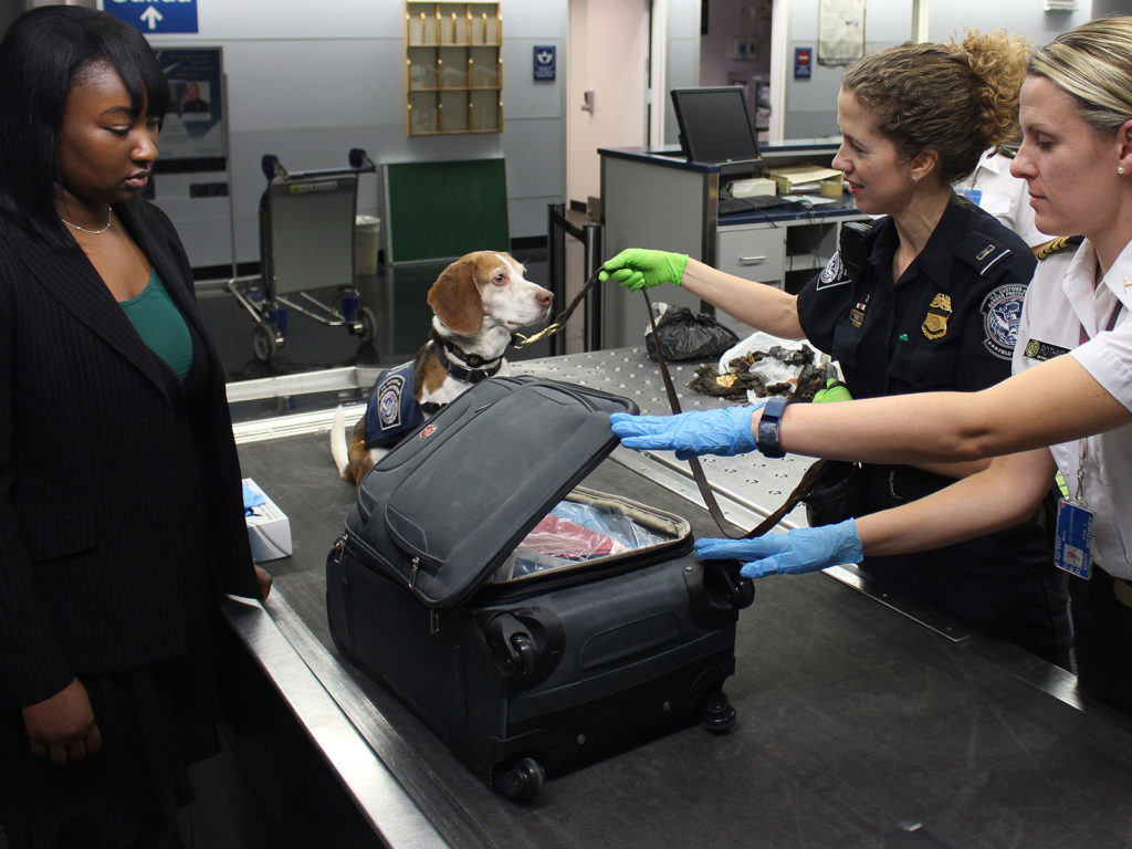 Woman's suitcase being searched by border police and sniffer dog at airport.